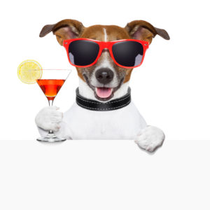 funny cocktail dog behind a white banner