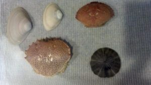 beach-finds